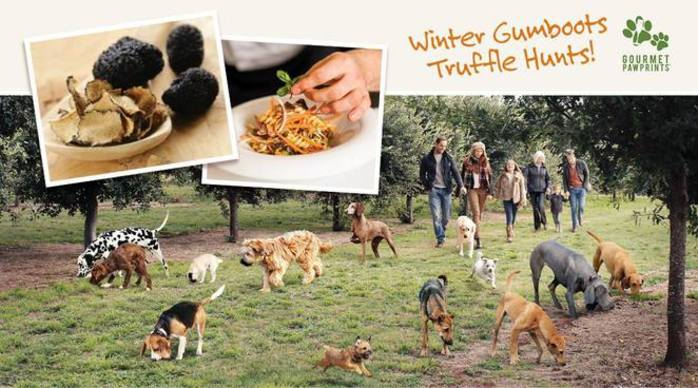 Gourmet Pawprints - Truffle Hunts