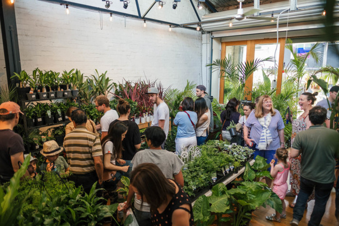 Jungle by Moonlight - Twilight Indoor Plant Warehouse Sale