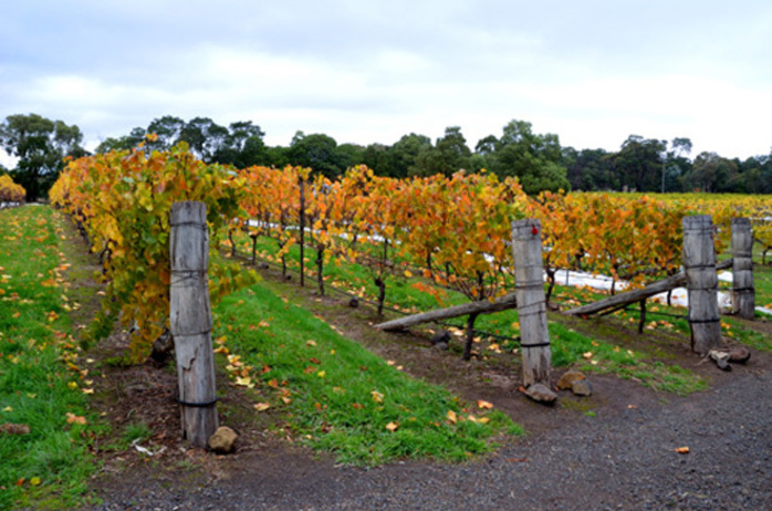 Macedon Ranges Wine and Food Budburst Festival