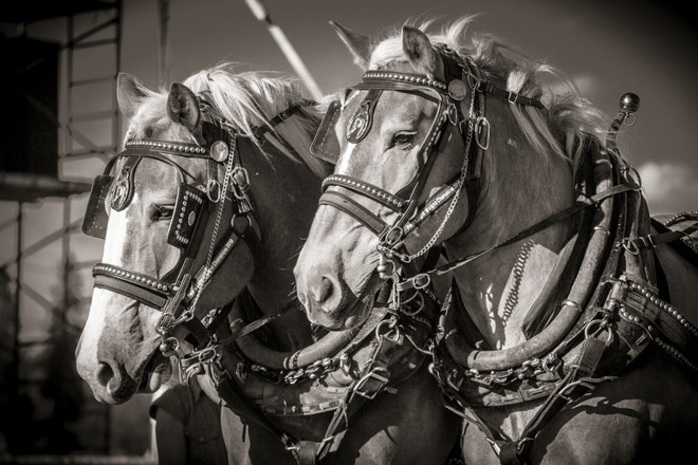 National Clydesdale Heavy Horse Festival